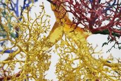 3条结构树静脉 库存照片