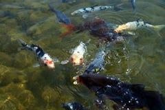 3条腼腆的鱼 免版税库存图片
