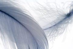 3根羽毛 免版税库存图片
