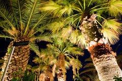 3棕榈树 图库摄影