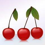 3棵樱桃 向量例证