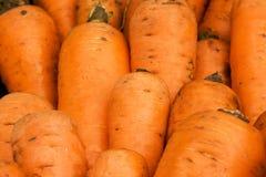 3棵红萝卜 免版税图库摄影