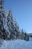 3横向冬天 库存图片