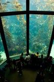 3水族馆 免版税库存图片