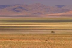 3沙漠 免版税库存照片