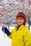 3浆果冬天 库存图片