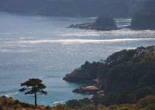 3海岸线结构树 库存图片