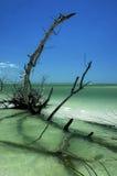 3海滩风景的佛罗里达 免版税图库摄影