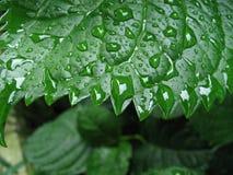 3湿的叶子 免版税图库摄影