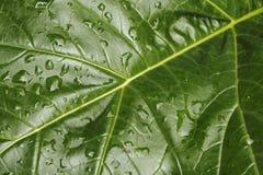 3滴叶子雨珠 库存照片