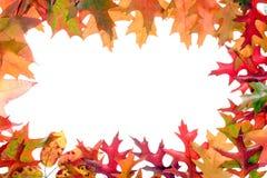 3片秋天框架叶子 库存照片