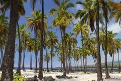3片绿洲棕榈树 免版税库存照片
