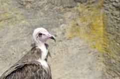 3猎鹰训练术猛禽显示 免版税库存照片