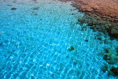 3珊瑚埃及红色礁石海运 图库摄影