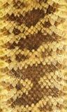 3皮革响尾蛇皮肤 免版税图库摄影