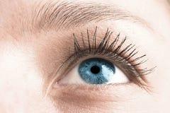 3眼睛 免版税图库摄影