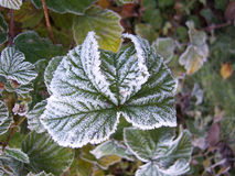 3结霜的叶子 免版税库存图片