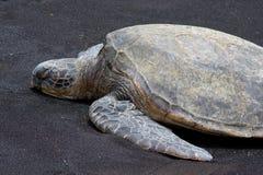 3绿浪乌龟 免版税图库摄影