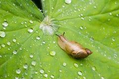 3蜗牛 免版税库存图片