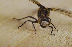 3蜻蜓 图库摄影