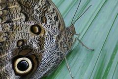 3蝴蝶 免版税库存图片