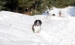 3雪蹦跳的人 免版税库存照片