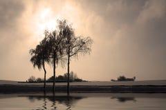 3 árvores Fotos de Stock Royalty Free
