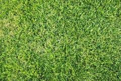 3 łąkowego naturalny Zdjęcia Stock