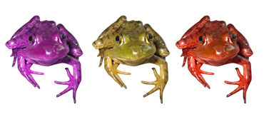 3 żaby kolorowej zdjęcie royalty free