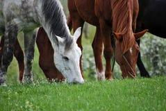 3 άλογα Στοκ Φωτογραφία