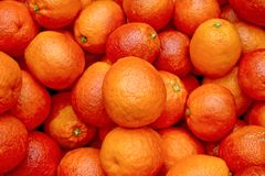 3 αιματηρά πορτοκάλια Στοκ Εικόνες