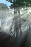3 ακτίνες Θεών Στοκ φωτογραφία με δικαίωμα ελεύθερης χρήσης