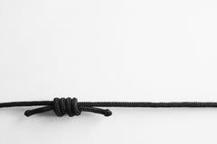 3 καλημάνες αμπέλων Στοκ φωτογραφία με δικαίωμα ελεύθερης χρήσης