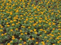 3 λουλούδια Στοκ Φωτογραφίες