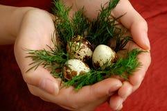3 νησοπέρδικες αυγών Στοκ εικόνα με δικαίωμα ελεύθερης χρήσης