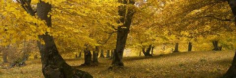 3 Οκτωβρίου στοκ εικόνες