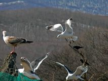 3 πετώντας γλάροι Στοκ φωτογραφία με δικαίωμα ελεύθερης χρήσης
