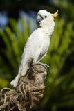 3 σειρές πουλιών τροπικές Στοκ Φωτογραφίες