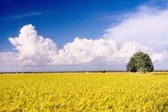 3 σειρές ρυζιού πεδίων Στοκ Εικόνα