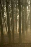 3 σκιαγραφημένα δέντρα Στοκ Εικόνες
