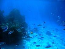 3 ψάρια Στοκ Εικόνες