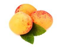 3 абрикоса с листьями Стоковые Фото