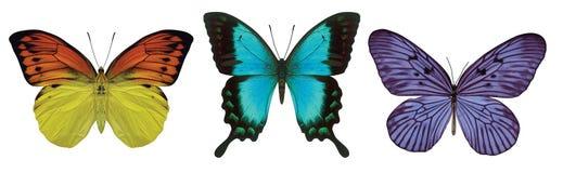 3 бабочки Стоковые Изображения