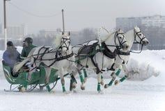 3 белых лошади Стоковое Фото