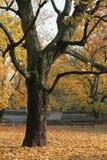 3 вала осени Стоковое Фото