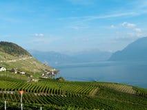 3 виноградника lavaux стоковые фото