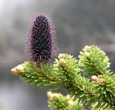 3 высокогорных цветка mianning пейзаж горы Стоковые Изображения