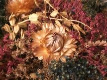 3 высушенных цветка падения Стоковое Фото
