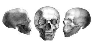 3 вычерченных черепа Стоковое Изображение RF