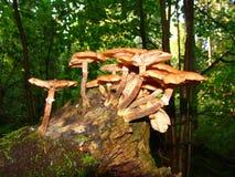 3 гриба Стоковая Фотография RF